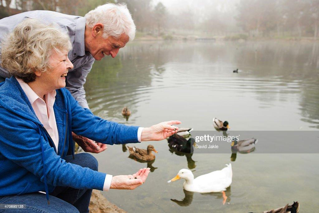 Husband and wife feeding ducks by the lake : Stock Photo