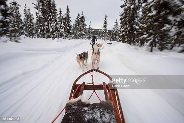 Huskie dogs pulling a sled, Kiruna, Sweden