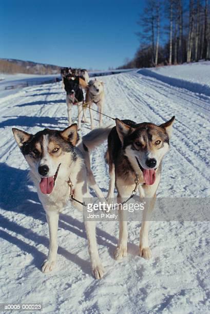 Huskies Pulling Sleigh