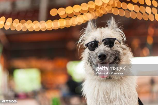 Husky and Irish Wolfhound mix dog wearing sunglasses while at a farmers market. Young mutt has a gleeful expression on his face.
