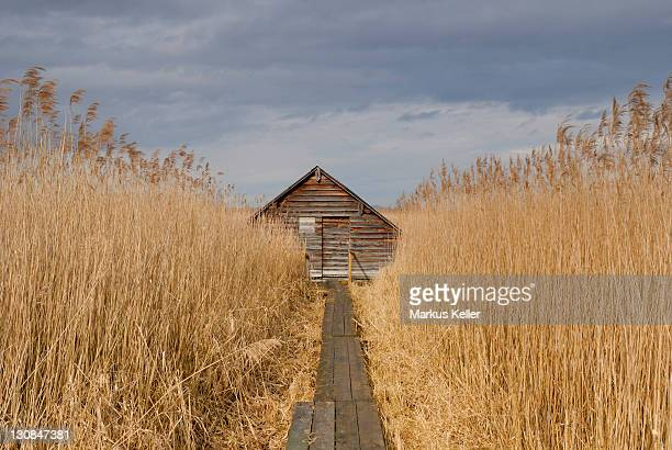 Hut in a reed field - Federsee - Southern Germany, Europe