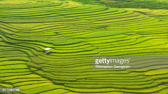 A hut in the pattern of rice field