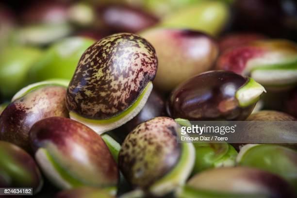 Hyacinth Bean Close Up