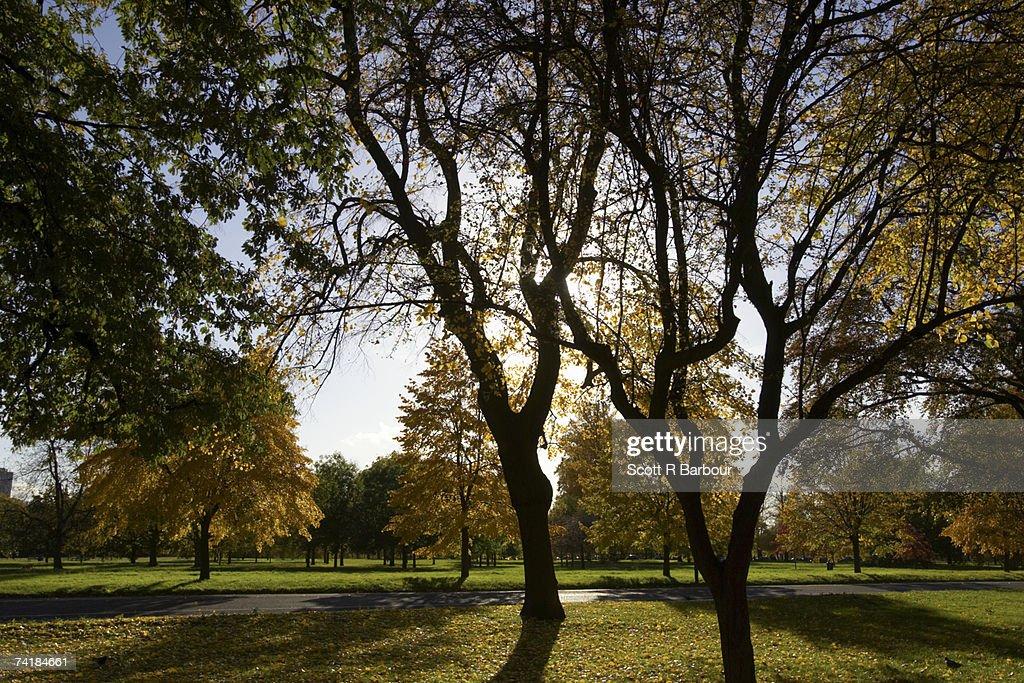'Hyde Park in Autumn. London, England.' : Stock Photo