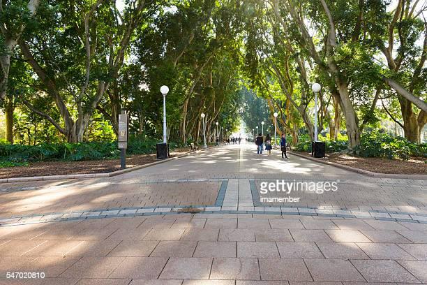 Hyde Park Sydney Australia, copy space