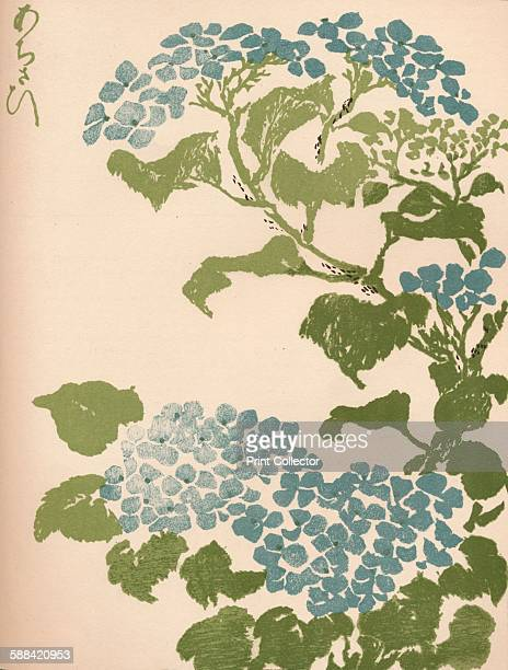 Hydrangea' 1904 Keisai was a japanese Ukiyoe artist From The Studio Volume 31 Artist Ikeda Eisen