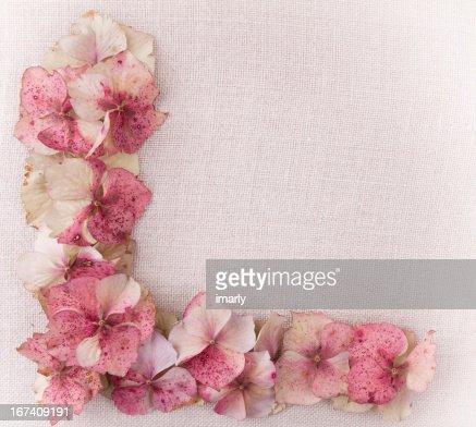 Hydrangea flower petals in bottom left corner : Bildbanksbilder