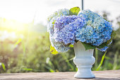 hydrangea flowers in white vase top on old wooden table and sunlight of sunset