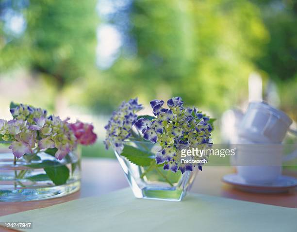 Hydrangea in Vase, Front View, Close Up, Differential Focus, In Focus, Out Focus