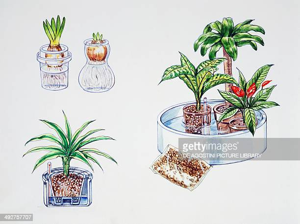 Hydroculture growing of plants in a soilless medium or an aquatic based environment illustration
