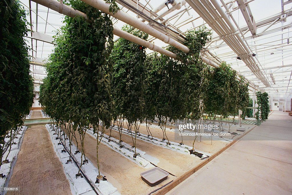 Hydroponic farm : Stock Photo