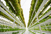 Lettuce farming in a modern hydroponic vertical farm which uses only 1% of water a normal soil based farm would require.