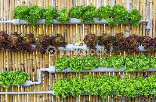 Hydroponique jardin vertical photo thinkstock for Jardin hydroponique