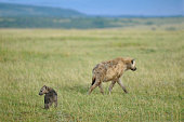 Hyena and Baby Stock Image