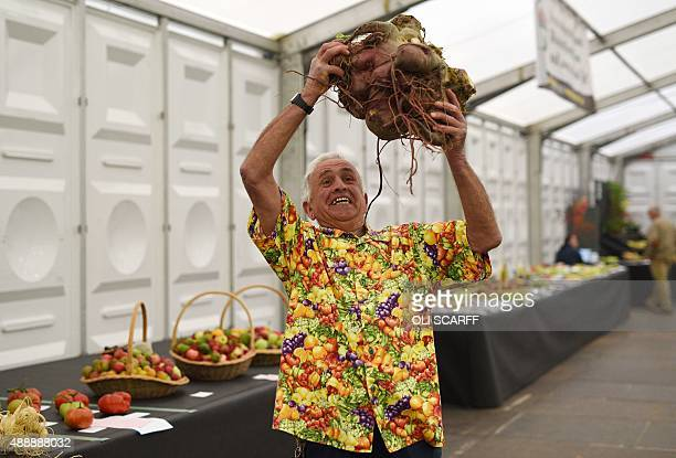 Ian Neale holds aloft his winning 1414kg entry in the 'Heaviest Beetroot Competition' at the Harrogate Autumn Flower Show in northern England on...