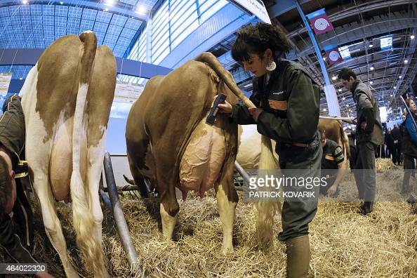 gen 39 iatest employees groom cows in an exhibition stand at the paris international agricultural. Black Bedroom Furniture Sets. Home Design Ideas