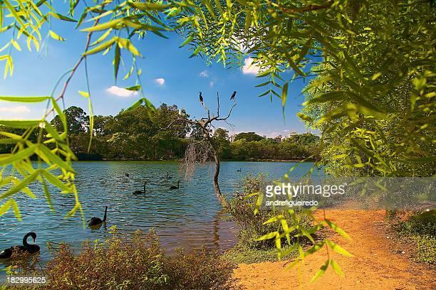 ibirapuera Lake