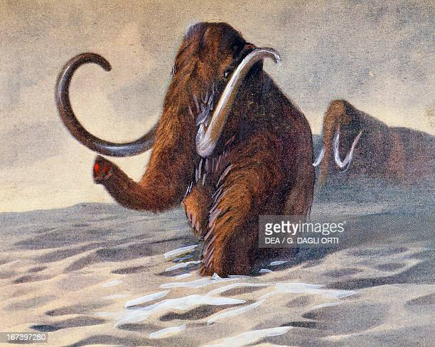 Ice Age Mammoths antediluvian animals Prehistory Paris Bibliothèque Des Arts Decoratifs