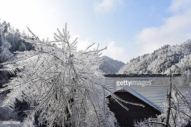 Ice and snow covers trees and rooftops in Hangzhou in eastern China's Zhejiang province on January 25 2016 Snow sleet and icy winds across Asia...