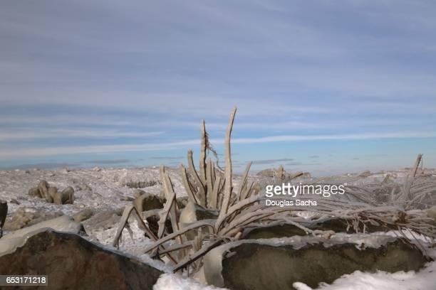 Ice covered lakeshore, Edgewater park, Cleveland, Ohio, USA