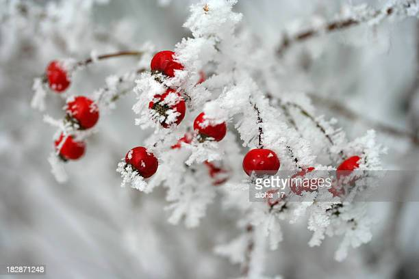 Ice covered red berries