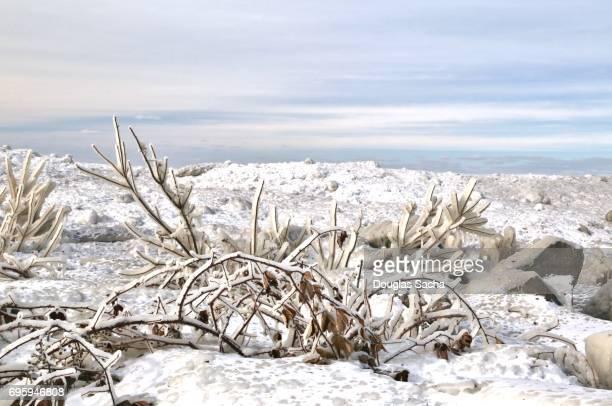 Ice covered shoreline