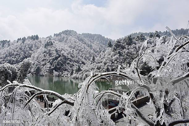 Ice covers the branches of a tree in Hangzhou in eastern China's Zhejiang province on January 25 2016 Snow sleet and icy winds across Asia caused...