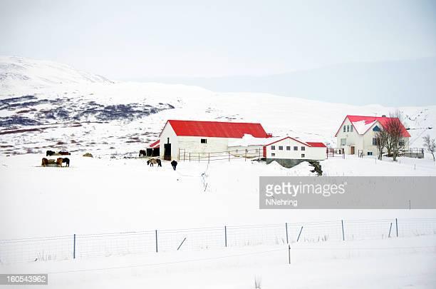 Icelandic farm in winter