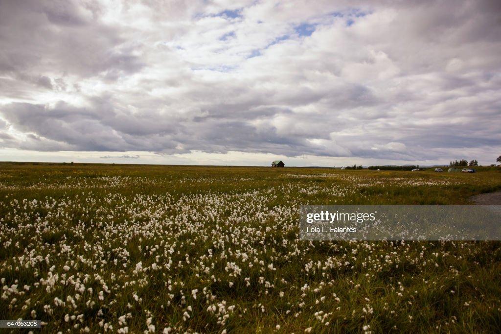 Icelandic landscape : Foto de stock