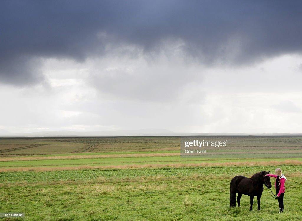 Icelandic ponies. : Stock Photo