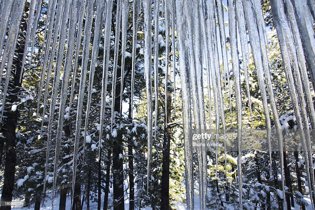 Icicles and snow covered trees : Stock Photo