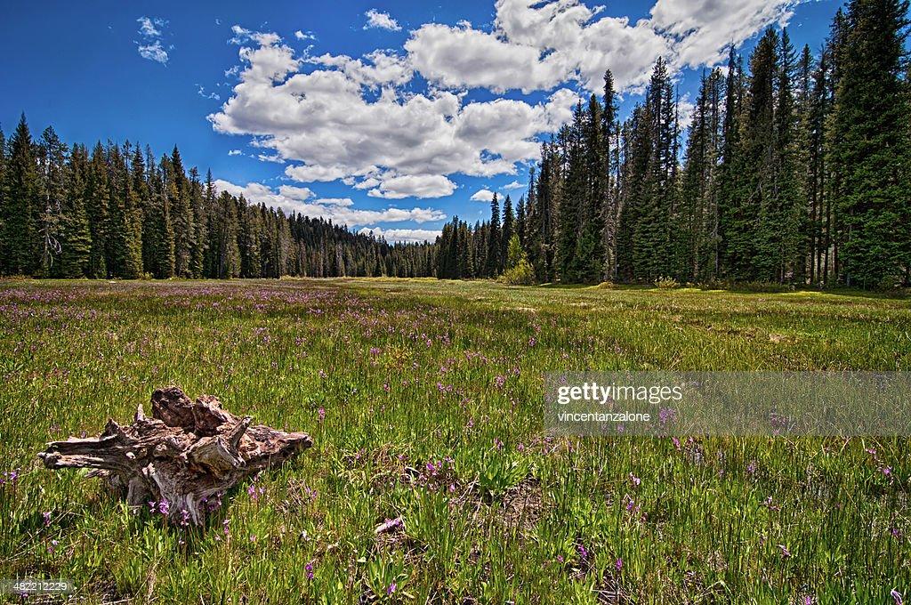 USA, Idaho, Boise, Boise National Forest, Long Creek Road, Field in Mountains