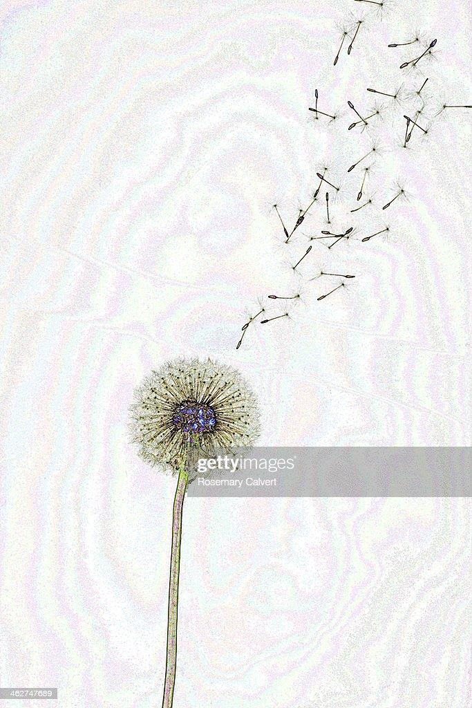 Ideas flying from fantasy dandelion
