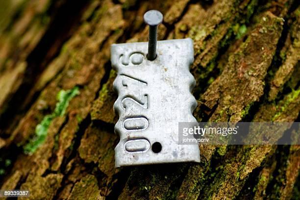 Étiquette d'Identification maîtrisé à un arbre.