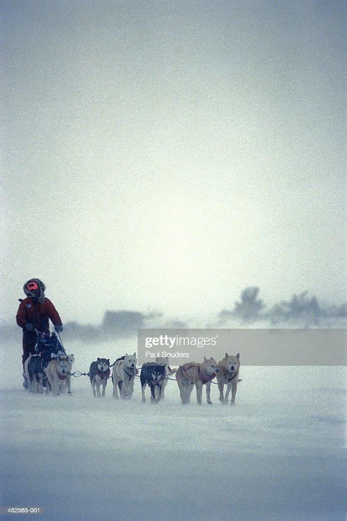 Iditarod musher,Alaska,USA