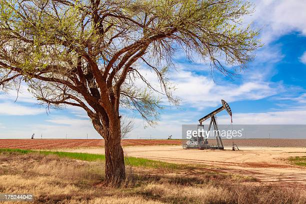 idle oil well pumpjack framed by tree, farmland, West Texas