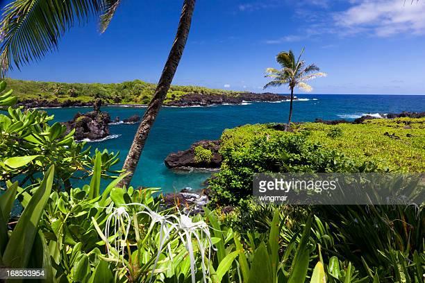 穏やかなベイ、ヤシの木や紺碧の海、マウイ、ハワイ州
