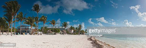 Idyllic beach palms ocean Florida