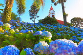 Idyllic cathedral church Bell tower and fairy tale landscape with Hydrangeas  - Gramado, Rio Grande do Sul state - Southern Brazil