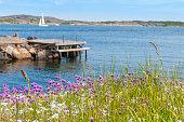 """""""Armeria maritima. Coast of Bohuslan, Sweden."""""""