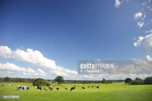 Idyllic Farm Pastures