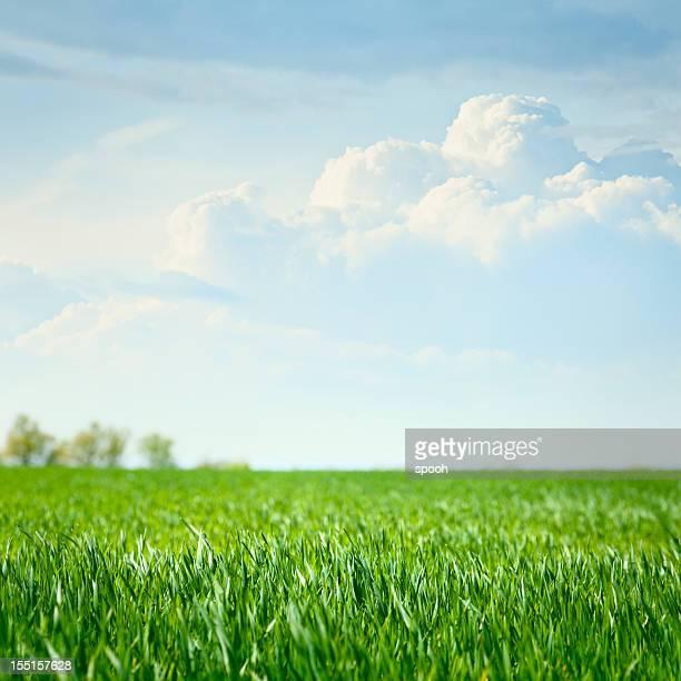 のどかな草原