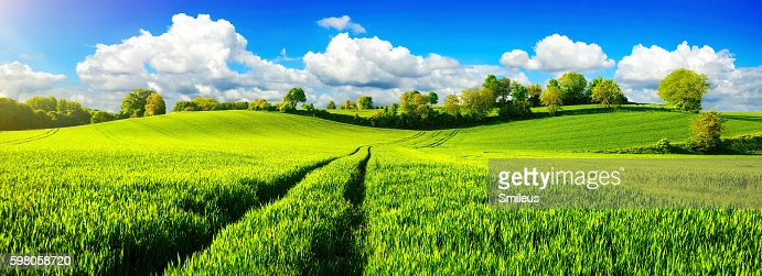 Idyllic green fields with vibrant blue sky : Stock Photo