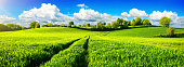 Panoramic landscape with idyllic vast green fields on hills, vibrant blue sky and fluffy white clouds