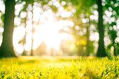 Idyllic green park at sunset