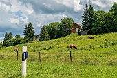 Idyllic landscape in the Alps with grazing cows in summer