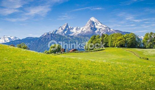 Idyllische Landschaft der Alpen mit grünen Wiesen und Blumen : Stock-Foto