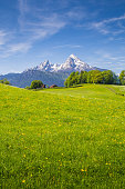Idyllic landscape in the Alps with fresh green meadows and blooming flowers and snow-capped mountain tops in the background in summer.