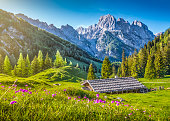 Idyllic landscape in the Alps with traditional mountain chalet and fresh green mountain pastures with blooming flowers at sunset, Nationalpark Berchtesgadener Land, Bavaria, Germany.
