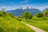 Idyllic summer landscape in the Alps with fresh green mountain pastures and snow-capped mountain tops in the background, Nationalpark Berchtesgadener Land, Bavaria, Germany.